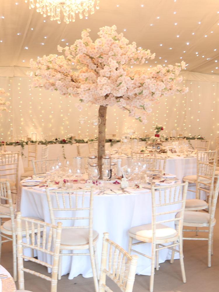 Pink-Blossom-Tree-3