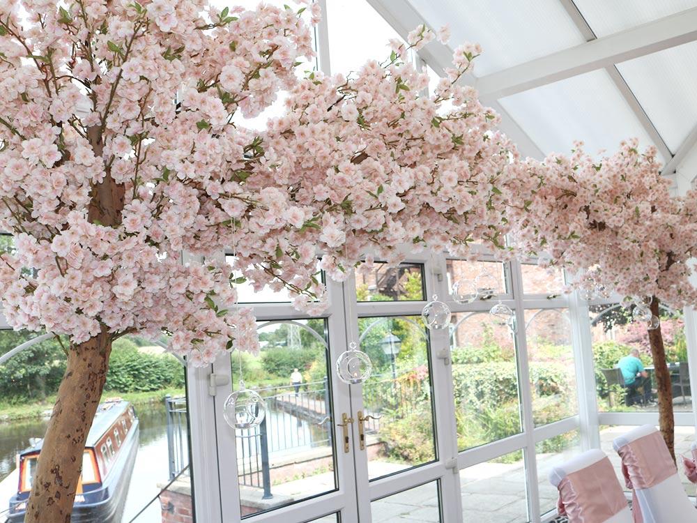 Pink-Canopy-Tree-2